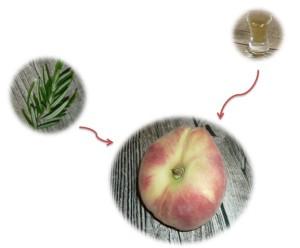 foodpairing pfirsich